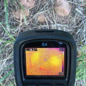 Thermal Termite Detection Yeppoon