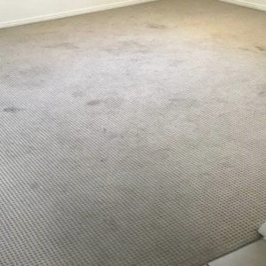 Before Carpet & Upholstery Cleaning